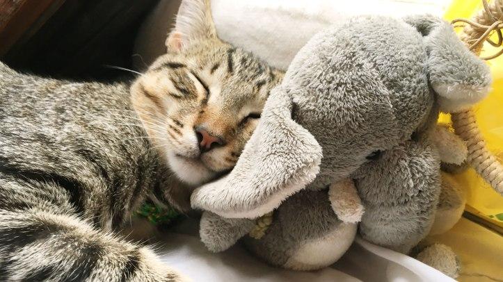 cat-elephant-sleep