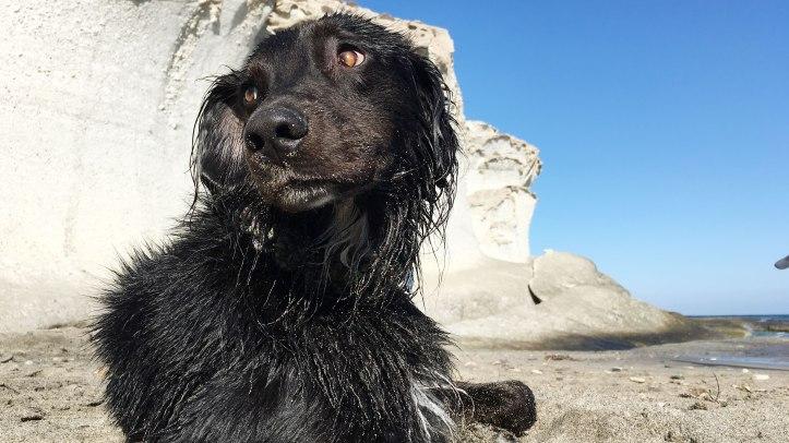 dog-sun-beach