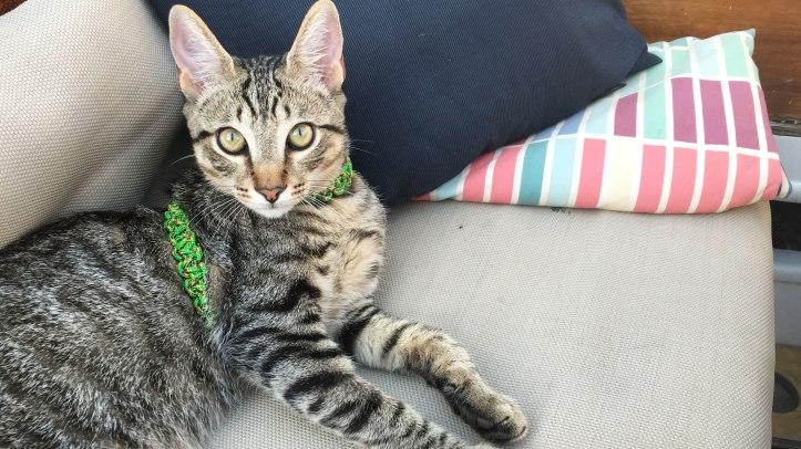 kitten-eyes