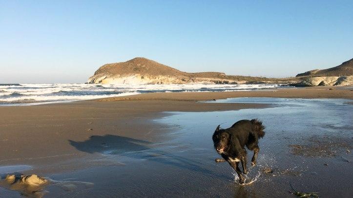running-dog-beach