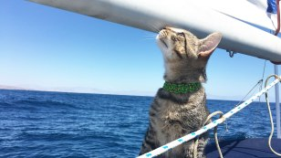 sailing-cat-sail