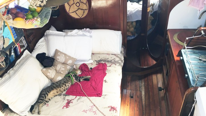 sailing-sleeping-cat