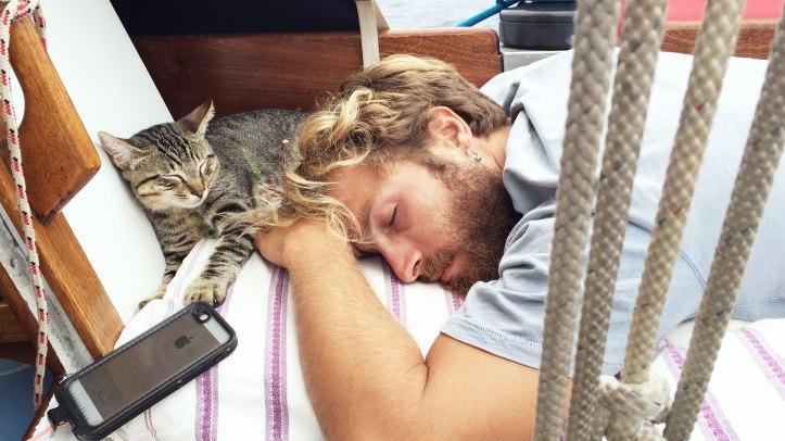 sleeping-cat