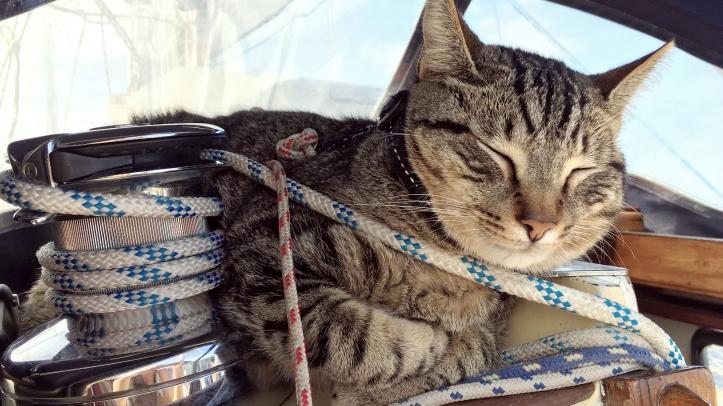sailing-cat