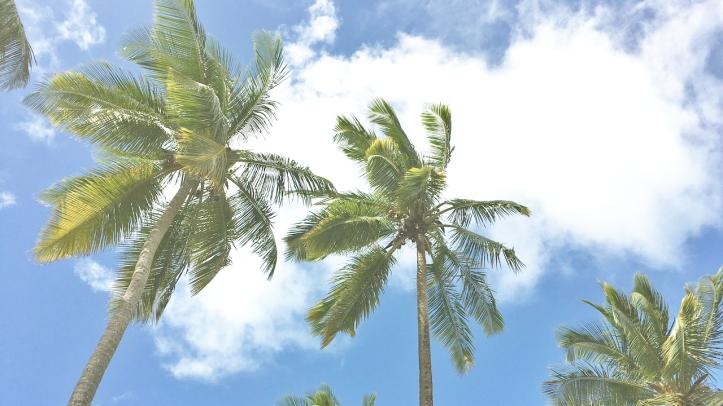 palmeras_Guadaloupe