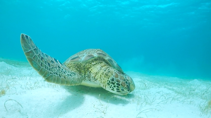 tortuga2_tobagocays_gopro_cythere