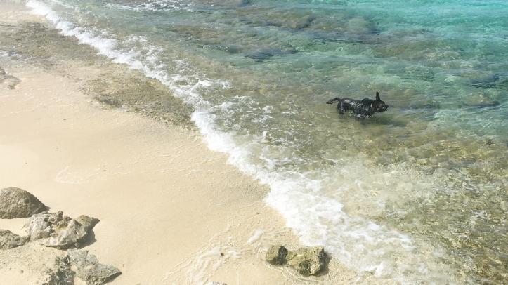 Triton_Bonaire_baño